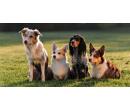Báječný den ve psí školce | Slevomat