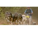 Jízda na káře tažené psím spřežením | Slevomat