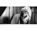 Exkluzivní péče pro psího miláčka | Slevomat