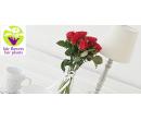 10 prémiových růží El Toro v délce 35 cm | Slevomat