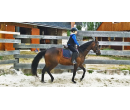 Víkendový intenzivní kurz výuky jízdy na koni  | Slevomat