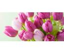 Čerstvé tulipány v šesti barvách | Slevomat