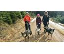 Dogtrekking s aljašským huskym | Slevomat
