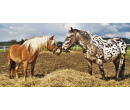 Péče o zvířátka, jízda na koni a oběd pro dva   Slevomat