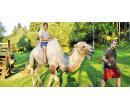 Zážitková jízda na velbloudovi | Slevomat