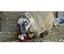 Výlet za zvířátky na Ranč   Slevomat