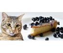 Káva a domácí dortík v kočičí kavárně | Slevomat