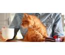 Domácí dortík a káva v kočičí kavárně | Slevomat
