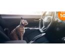 Ozonové čištění interiéru vozidla | Hyperslevy