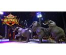 Vstupenky na show Cirkusu Humberto   Slevomat