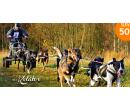 Jízda se psím spřežením, mushing | Hyperslevy