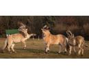 Výcvik jízdy na koni a péče o něj | Slevomat