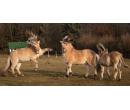 Vyjížďka na koních | Slevomat