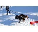Skijöring se psy na 3 hodiny | Adrop
