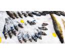 Čerstvé chlazené mořské ryby | Slevomat