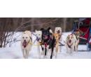 Jízdy se psím spřežením až pro 2 | Slevomat