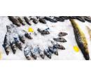 Čerstvé chlazené mořské ryby - 500 g tuňáka | Slevomat