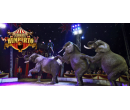 Lístky na show cirkusu Humberto   Slevomat