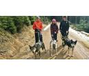 Dogtrekking: procházka s huskym po Jizerkách | Slevomat