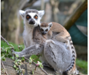 Rodinné krmení zvířat v Zooparku 2 + 3 děti | Firmanazazitky.cz