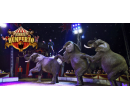 Vstupenka na show cirkusu Humberto | Slevomat