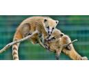 Vstupenka do Zoo Tábor | Slevomat