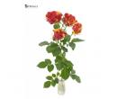 Africké prémiové růže Fire Flash | Slevomat