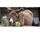 Komentovaná prohlídka oslí farmy pro 2 + 3 děti | Slevomat
