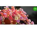 Voucher v hodnotě 230 Kč do zahradnictví | Radiomat
