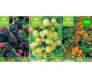 Poukaz na ovocné stromky a okrasné dřeviny | Radiomat