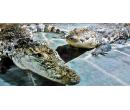 Vstup pro 1 osobu na VIP prohlídku Krokodýlí zoo   Slevomat