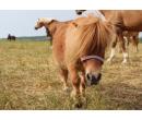 Staňte se farmářem - celodenní program | Adrop
