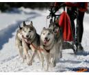 Mushing jízda se psím spřežením | Adrop
