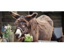 Návštěva zážitkové oslí farmy | Slevomat