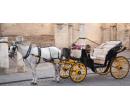 Jízda v kočáře taženém starokladrubským běloušem | Slevomat