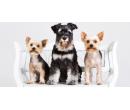 Kompletní péče o malého psa (do 10 kg) | Slevomat