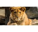 Jednodenní fotokurz v zoo Olomouc nebo Zlín | Slevomat