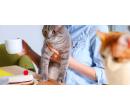 Otevřený voucher do kočičí kavárny v ceně 300 Kč | Slevomat