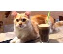 Káva a slaďoučký dezert v kočičí kavárně    Slevomat