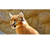 Celodenní vstupné do Zooparku Zájezd | Slevomat