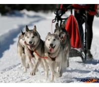 Mushing jízda se psím spřežením   Adrop