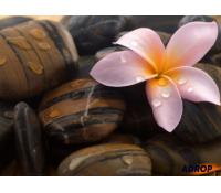 Havajská masáž LOMI LOMI | Adrop