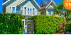 Jilm sibiřský - živý plot: 50ks sazenic + hnojivo | Hyperslevy